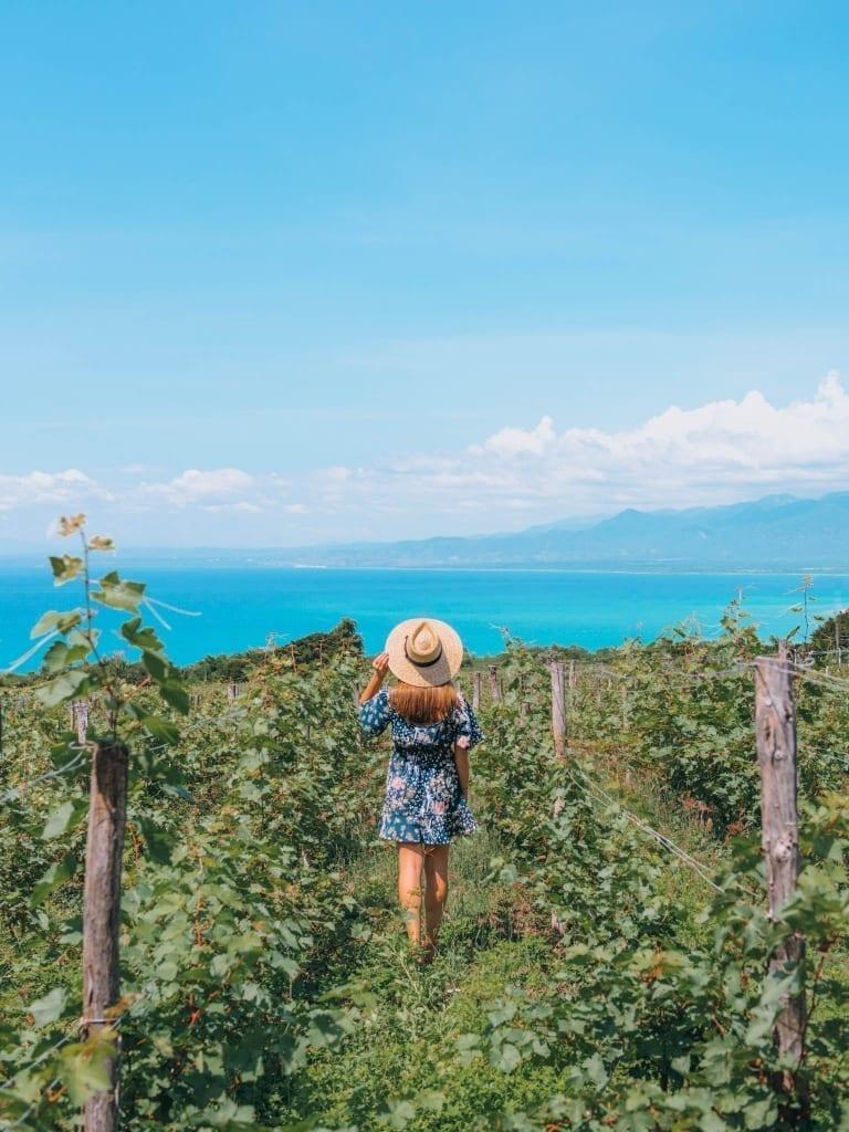 Ocoa Bay Winery Dominican Republic