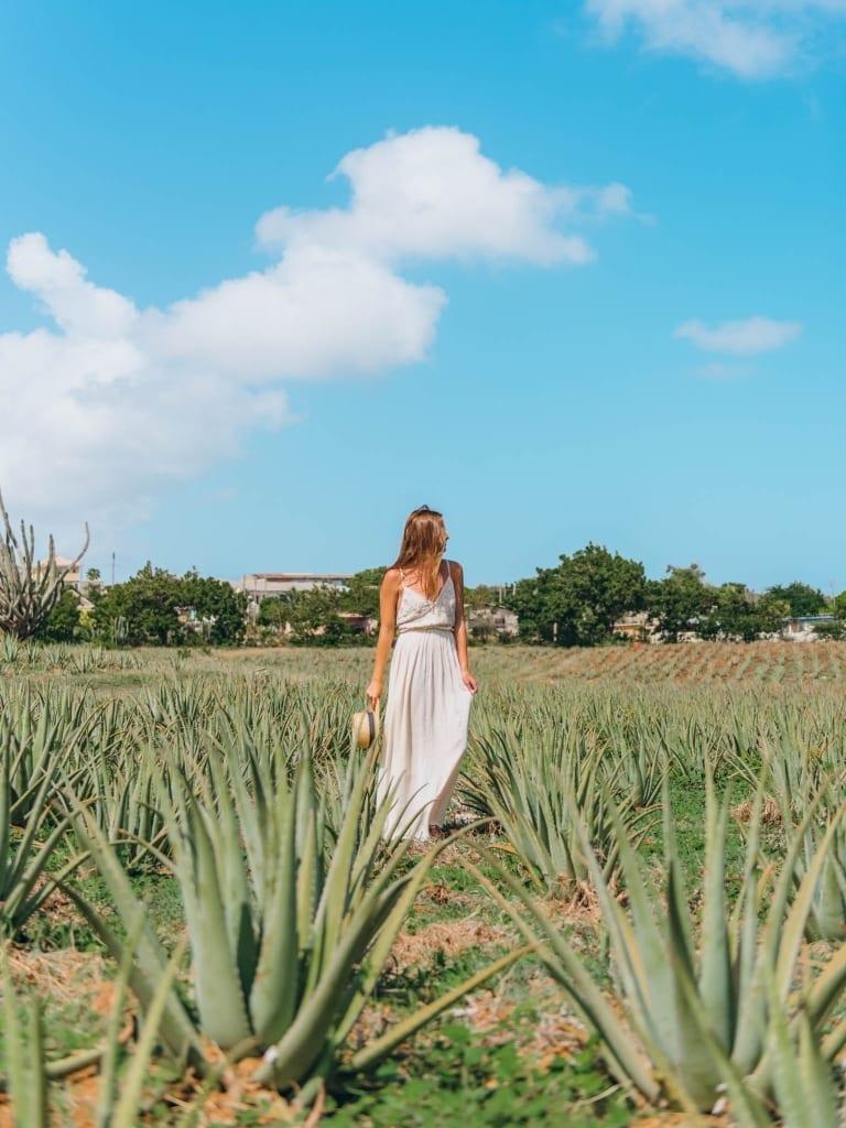 Curacao Aloe Plantation.