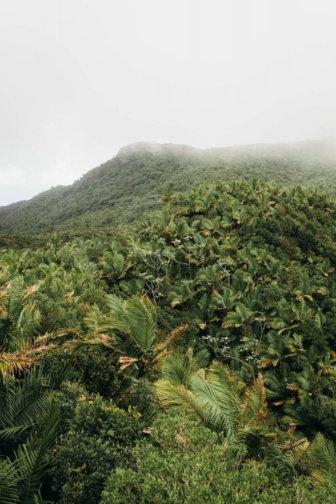 Mt. Britton, El Yunque Rainforest