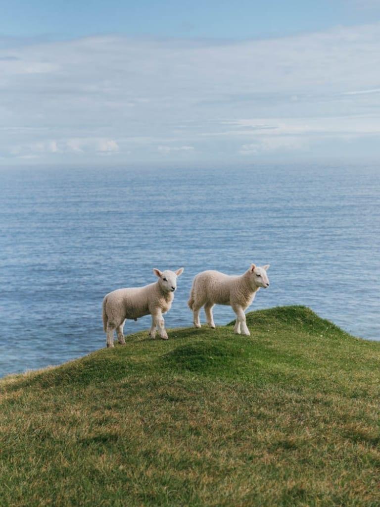 lambs isle of skye